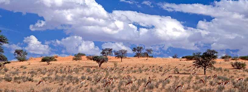 Kalahari 05