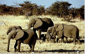 elephants_smallgroup